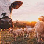 foodtech-futur-viande